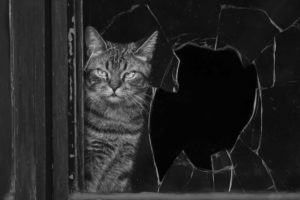 Are You Worried Your Pets Will Damage Your New Windows? Check Out These Tips to Help Keep Your Windows Safe